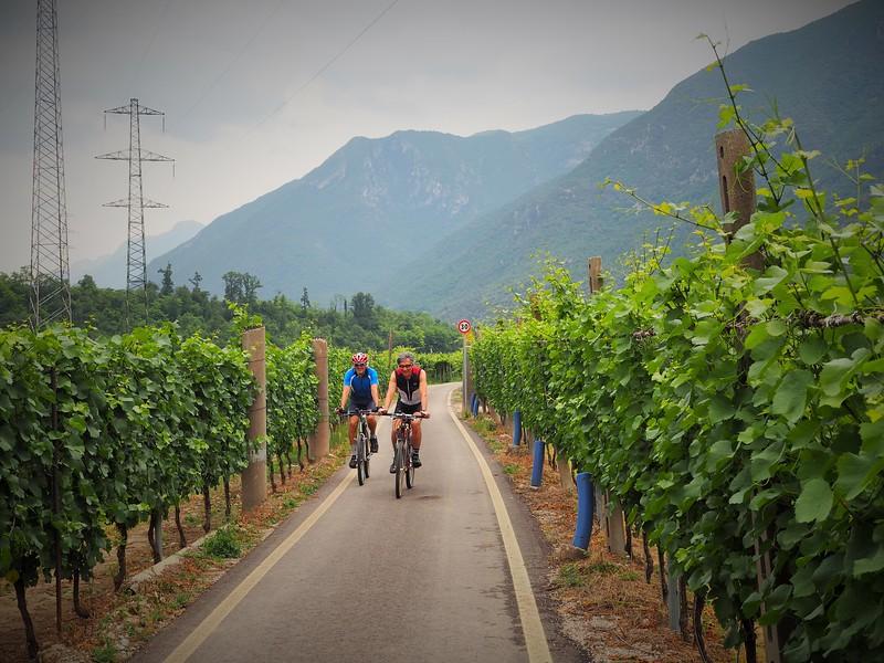Two men bicycle towards the camera on a narrow path through Italian vineyards, mountainous background.